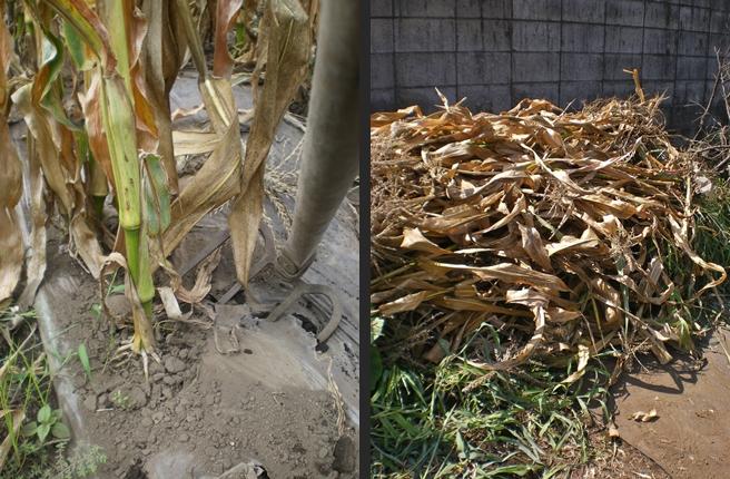 2012-08-23 2012-08-23 004 002-horz
