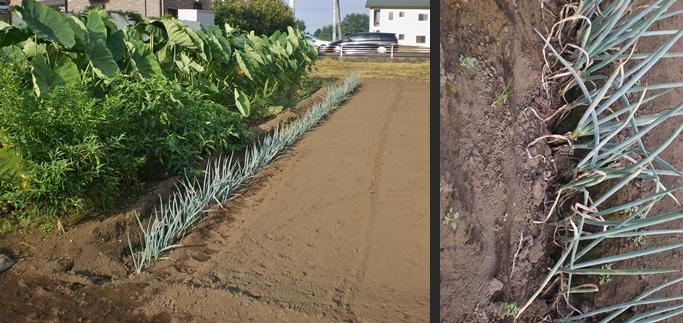 2012-08-30 2012-08-30 001 001-horz