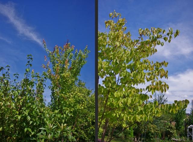 2012-09-05 2012-09-05 001 027-horz