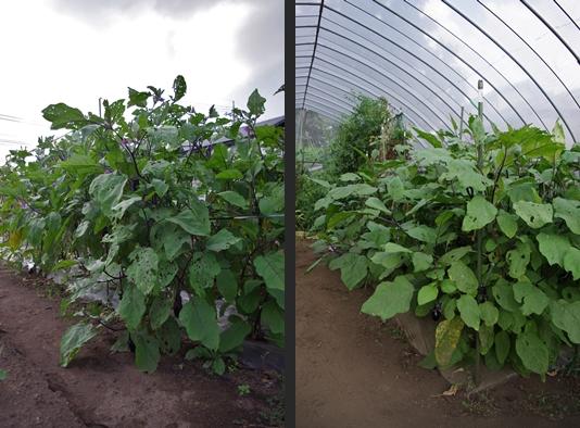 2012-09-08 2012-09-08 001 012-horz