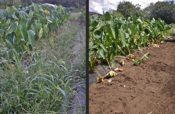 2012-09-11 2012-09-11 004 014-horz