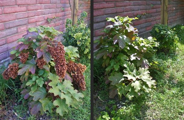 2012-09-12 2012-09-12 003 002-horz