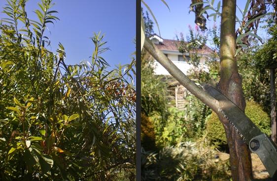 2012-10-04 2012-10-04 001 003-horz