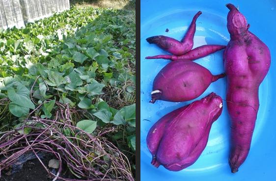 2012-10-05 2012-10-05 001 027-horz