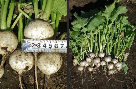 2012-10-11 2012-10-11 001 003-horz