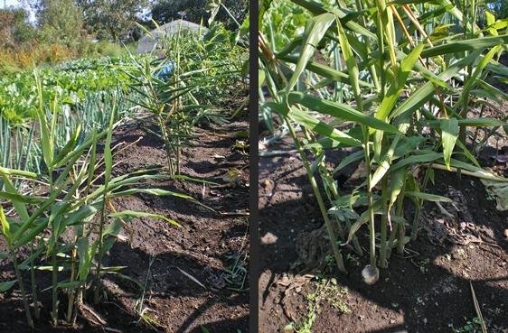2012-10-15 2012-10-15 003 062-horz