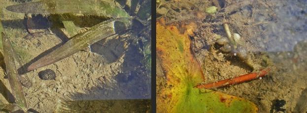 2012-10-15 2012-10-15 002 004-horz