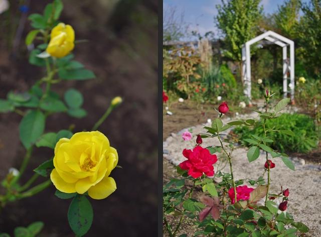 2012-10-22 2012-10-22 004 006-horz