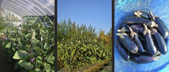 2012-10-25 2012-10-25 004 003-horz