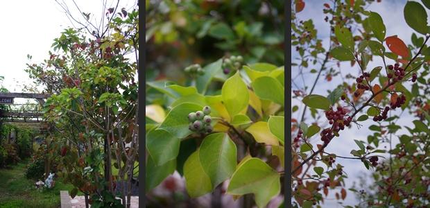 2012-10-27 2012-10-27 002 014-horz