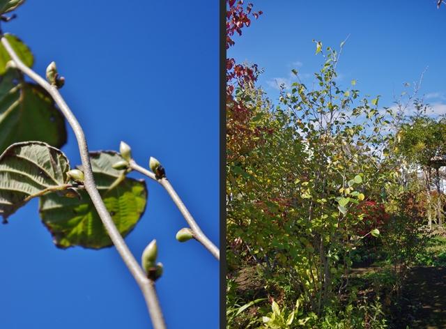 2012-11-03 2012-11-03 001 061-horz