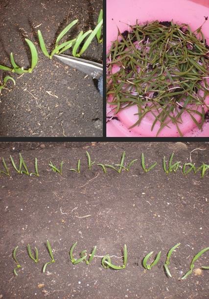 2012-12-22 2012-12-22 002 020-horz-vert
