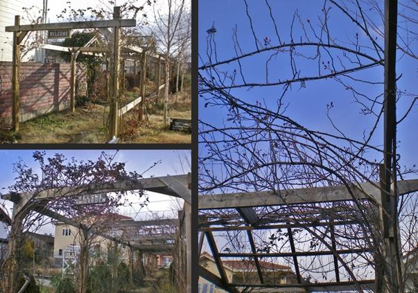 2012-12-24 2012-12-24 001 013-vert-horz