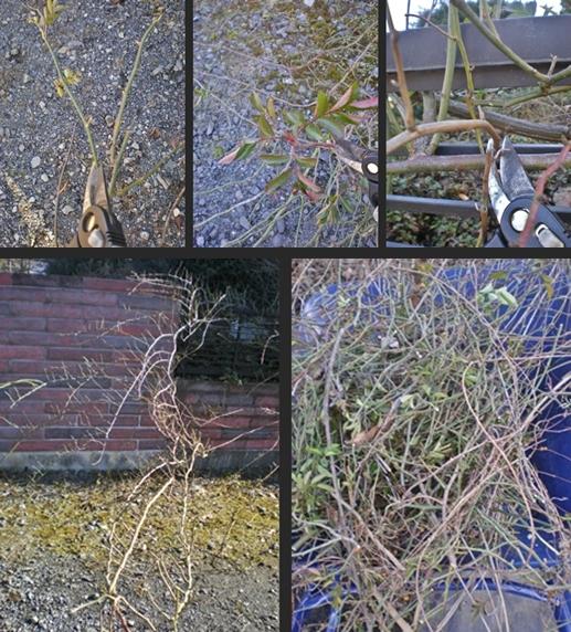 2012-12-24 2012-12-24 003 015-horz-vert