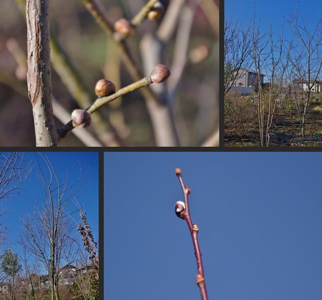 2012-12-25 2012-12-25 001 080-horz-vert