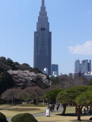 タワーと桜2