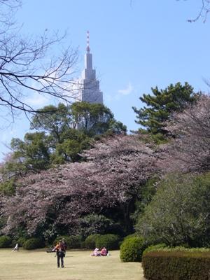 タワーと桜