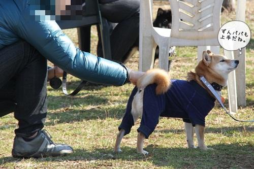 犬祭り12