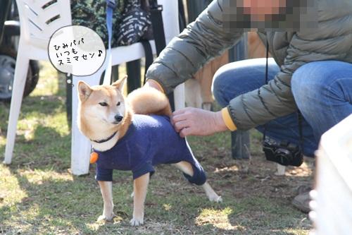 犬祭り13