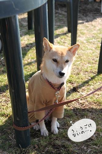 犬祭り14