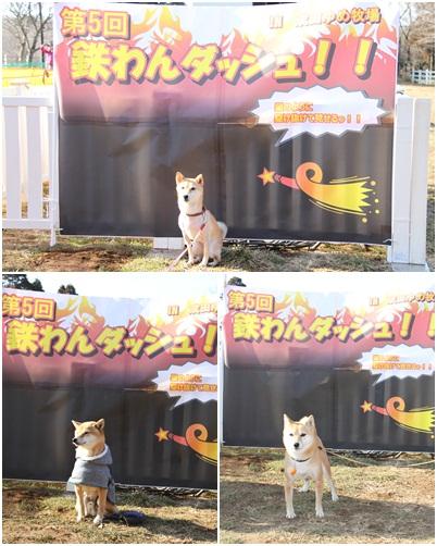 犬祭り18
