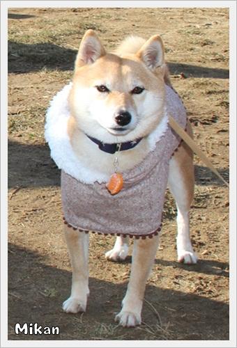 犬祭り19