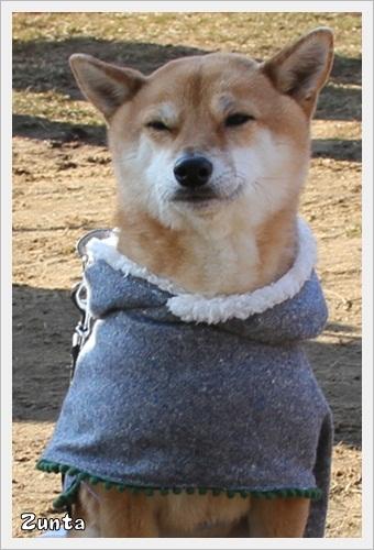 犬祭り20