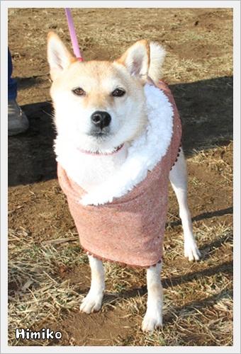 犬祭り21