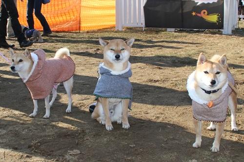 犬祭り22