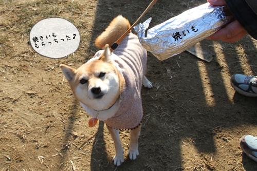 犬祭り23
