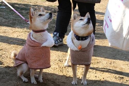 犬祭り24