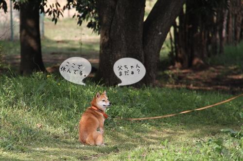 桜散歩15