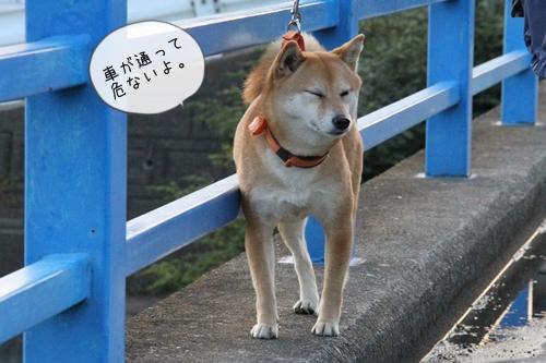 桜散歩18