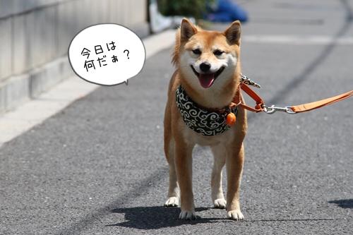 大江戸小町会1