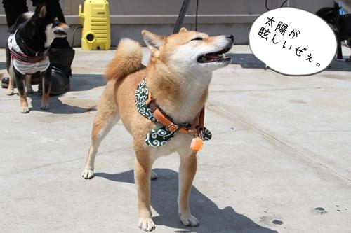 大江戸小町会4