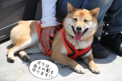 大江戸小町会12