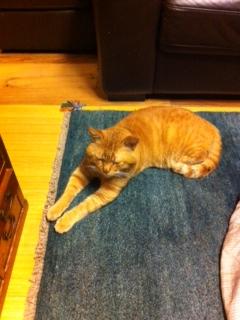 坊ちゃんと絨毯
