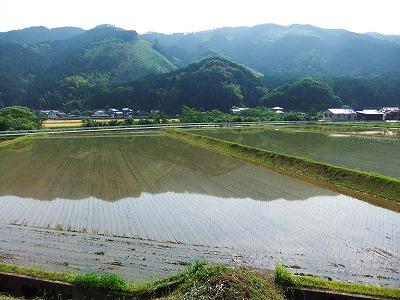 2012田植2 - コピー_1