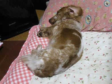 正しい枕の使い方?
