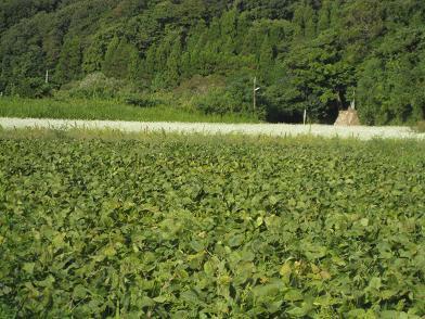 大豆畑と蕎麦畑