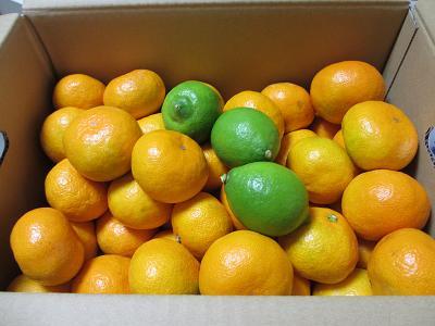 柑橘王国のみかん♪