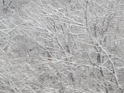 雪の芸術2