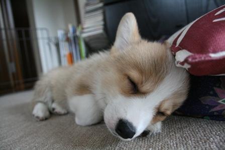 寝る子は育つ!2
