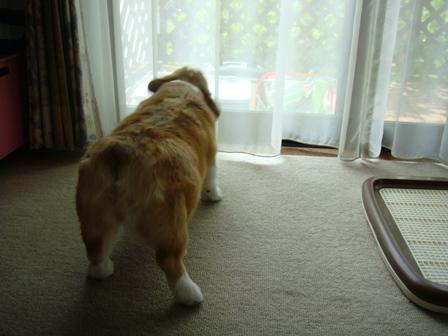 番犬意識に目覚める!