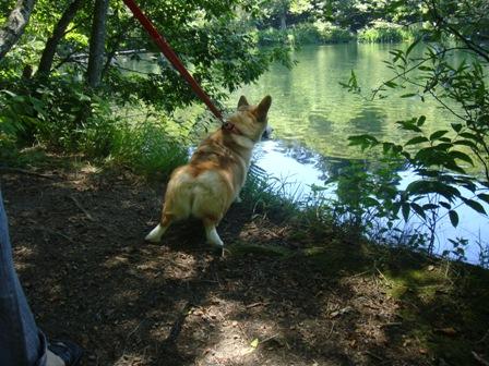 池の鴨が気になって仕方ない!