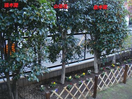 庭木もきれいに