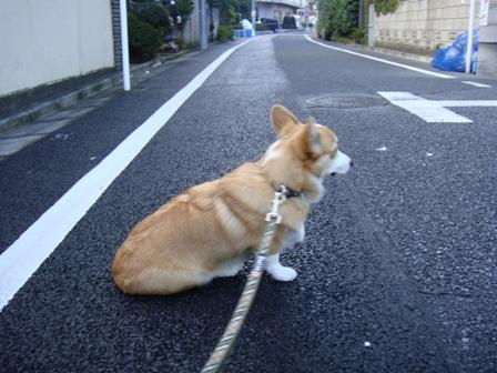 散歩はなぜしないといけないのか・・・