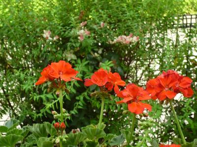 萩の花他 017