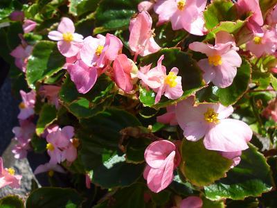 花々 002