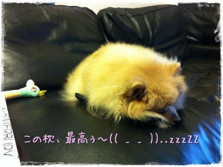 この枕、最高ぅ~(( _ _ ))..zzzZZ